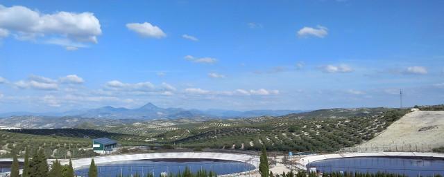 champs d'olivier baena espagne