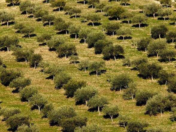 oliveti monti iblei