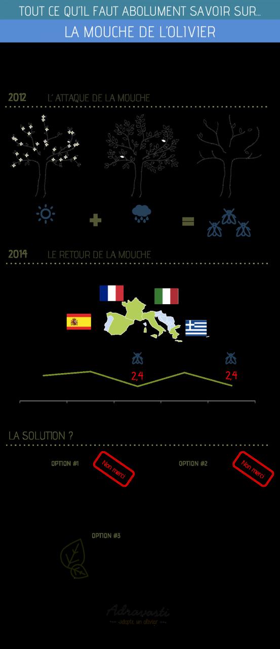 infographie la mouche de l'olivier
