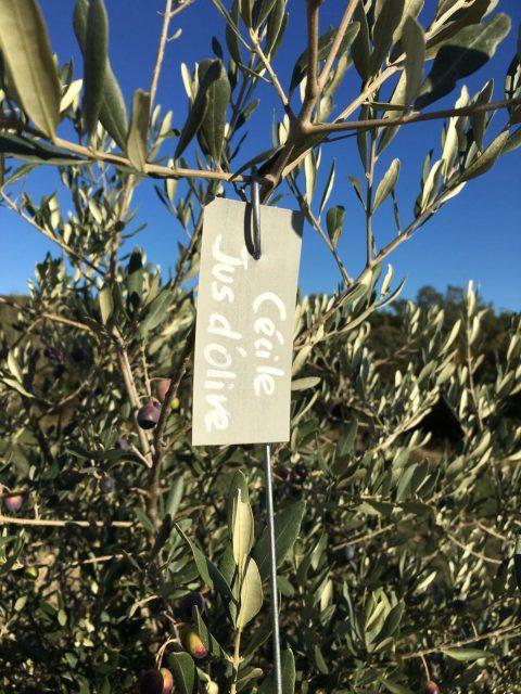 olivier de jus d'olive