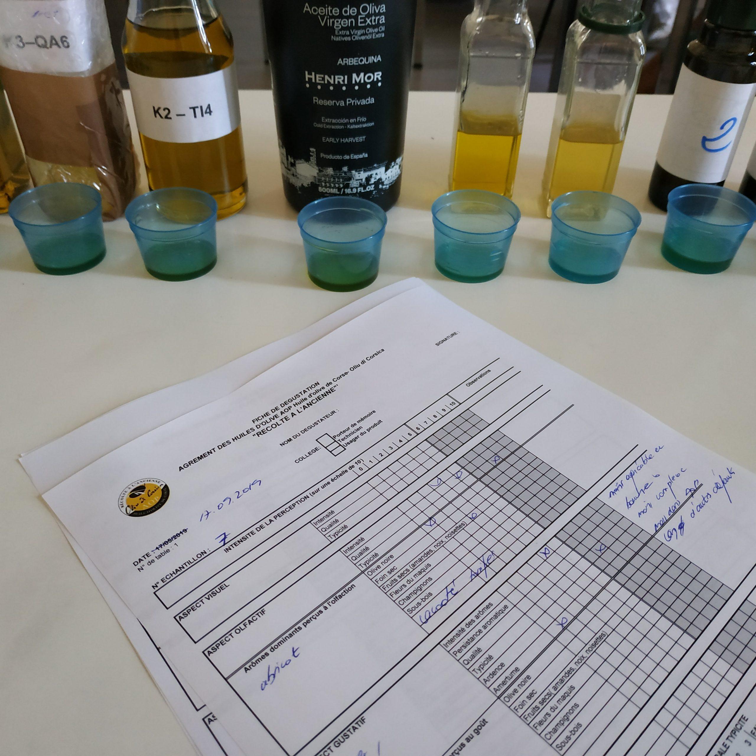 formations jury oliu di corsica corse