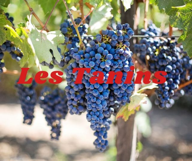 tanins ou tannins astringence